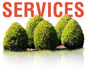 Services | Shrubs