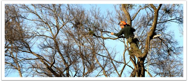 worker in trees
